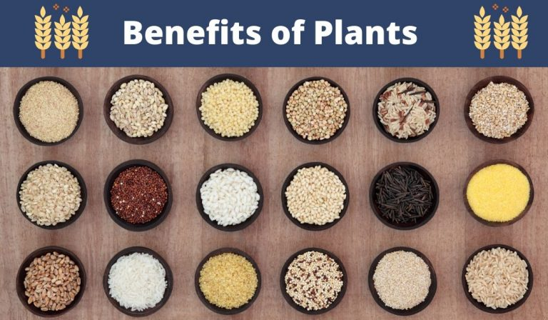 Benefits of Plants